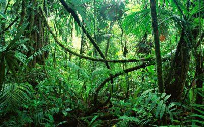 So orientieren Sie sich im Angebots-Dschungel
